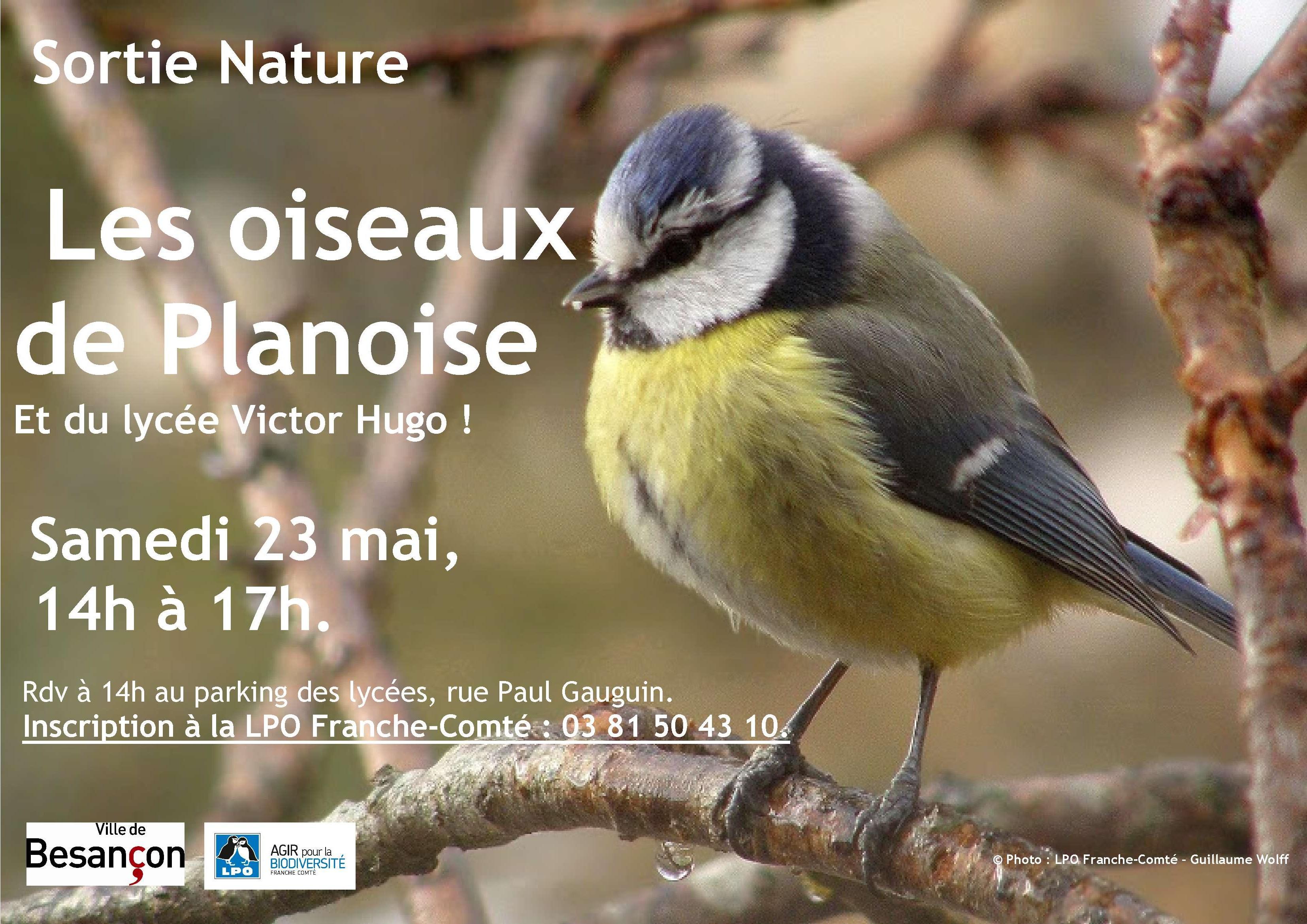 2015 05 23 Les oiseaux de mon quartier Planoise lycee VH