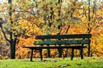 Un-vieux-banc-en-bois-en-automne